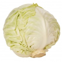 Organic Cabbage White