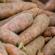 Organic Carrots Dirty