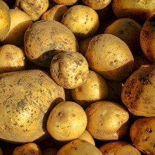 Organic Potatoes Orla
