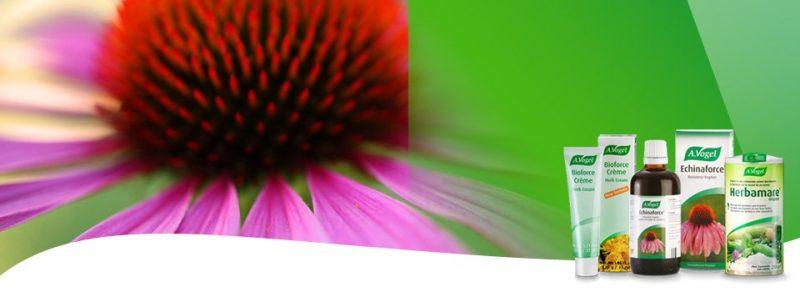 vogel-echinacea-banner